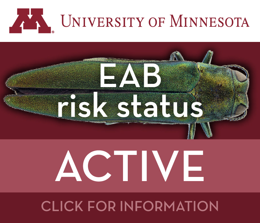 Emerald Ash Borer Program | Minnesota Department of Agriculture