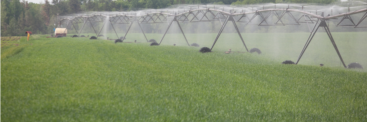 irrigatoin system in a field