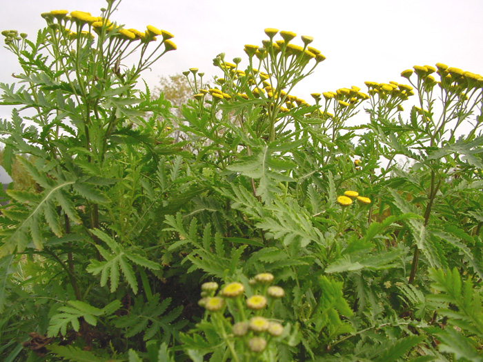Noxious Weed Disposal