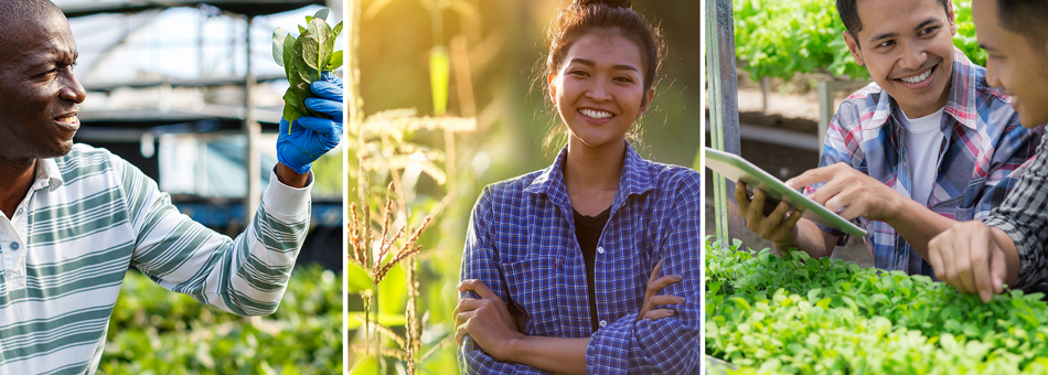Collage of photos depicting people of various ethnicities engaged in farming