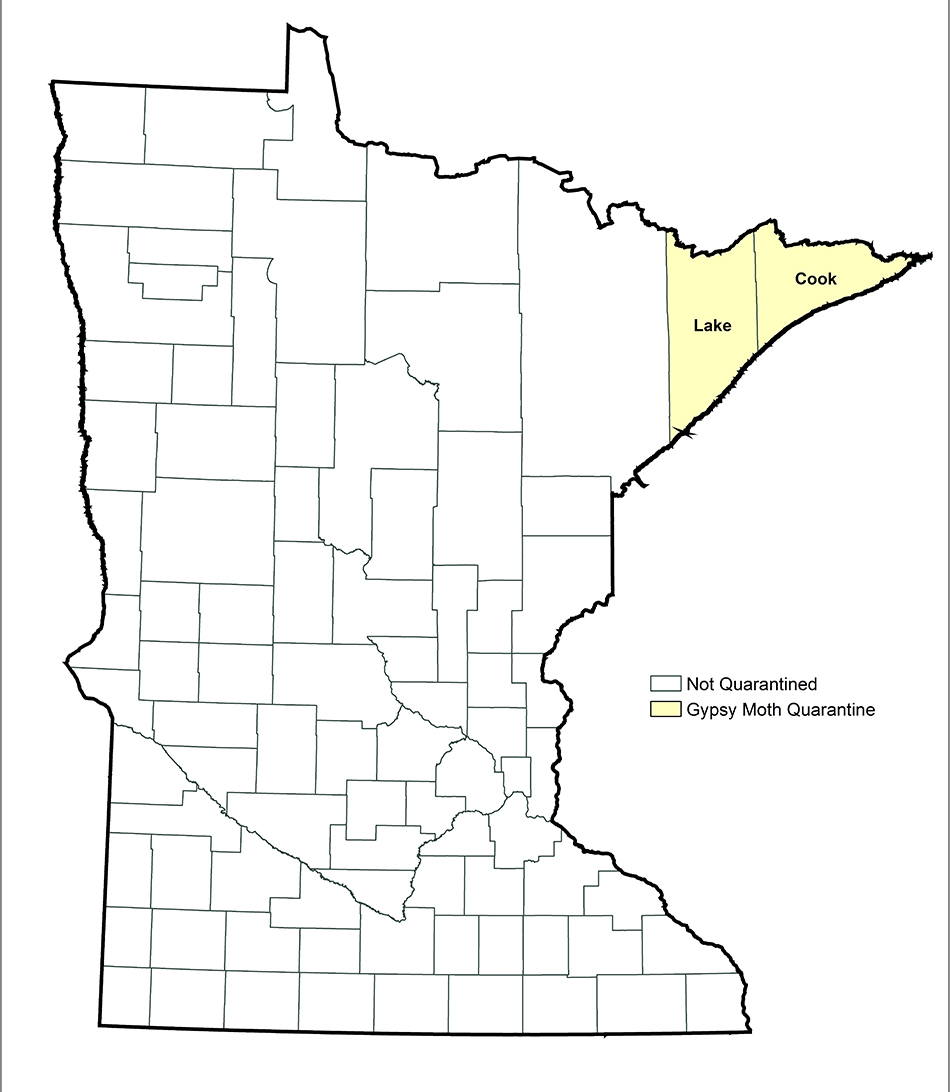 Map of Minnesota, showing counties quarantined for gypsy moth: Lake and Cook Counties.