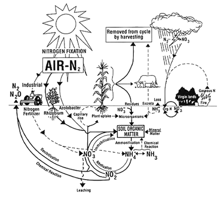 Ecological Effects Of Ammonia