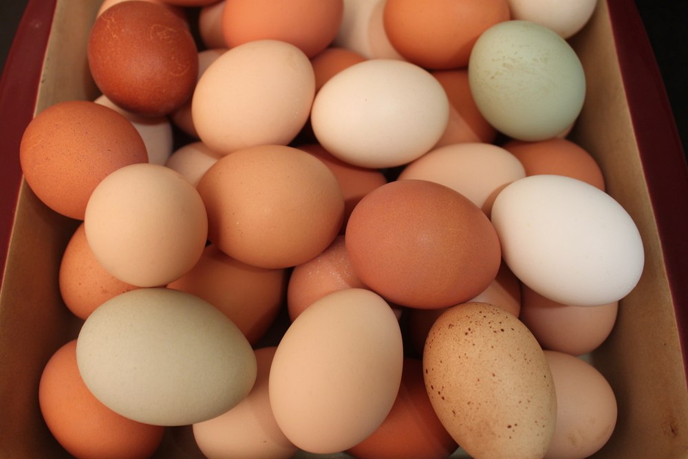 Multi Colored Eggs